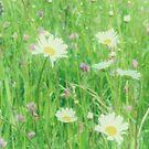 Wimpole Meadow 2018 by Lisa Kent