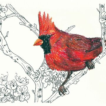 Northern Red Cardinal Bird - oil pastel and ink drawing by andreawillette