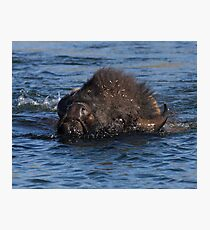 Bison Crossing Photographic Print