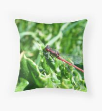 Large Red Damselfly (Pyrrhosoma nymphula) Throw Pillow