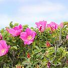 Beach Roses by Linda Crockett