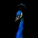 Pava Blue by Jamie Lee