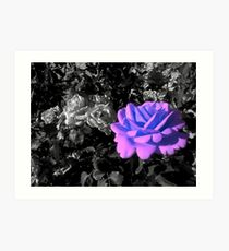 indigo-lilac rose, bwbg 05/28/18 Art Print