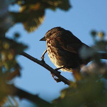 #1378 - Morning Bird by MyInnereyeMike