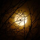 The Moon by WildestArt