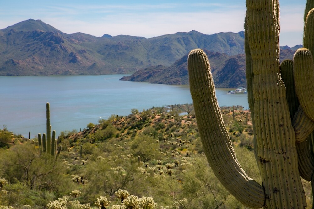 Saguaro by the Lake by Marshall Creative Media