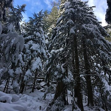 Snowy Forest by GrimbyBECK