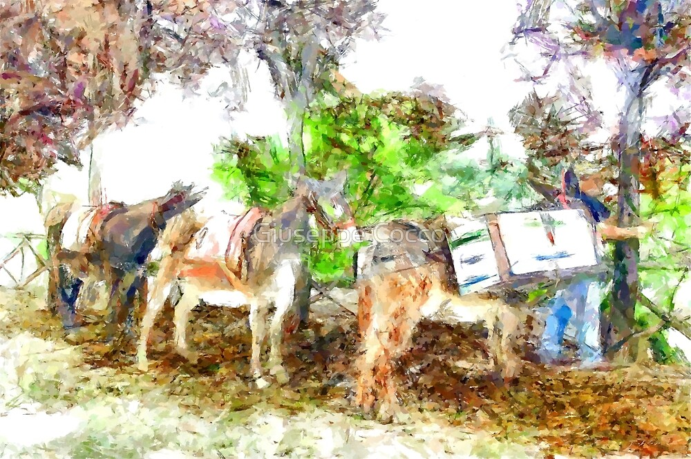 Donkeys for the recycling of garbage by Giuseppe Cocco