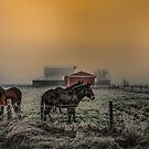 Mules at Rest by Charles & Patricia   Harkins ~ Picture Oregon