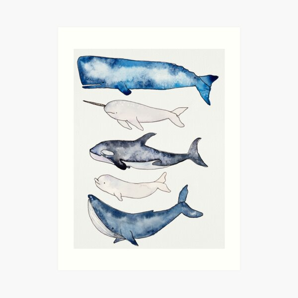 Watercolor Whales Art Print