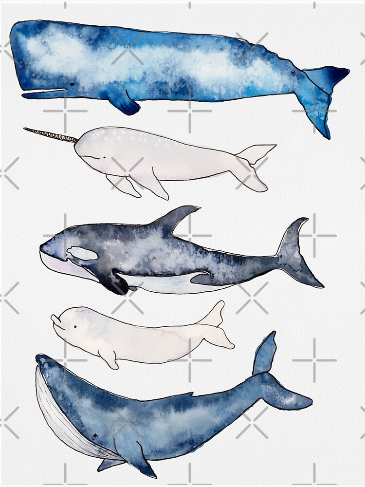 Watercolor Whales by Harpleydesign
