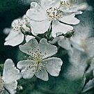 Rose Brocade by MotherNature2