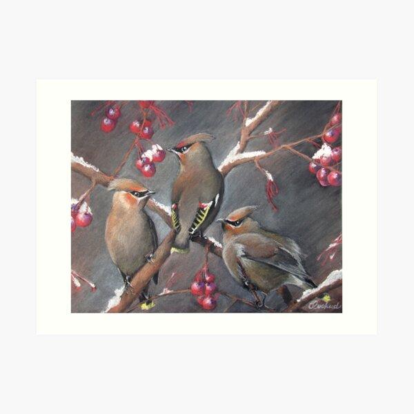 Cedar waxwings Art Print
