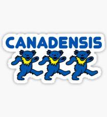 Canadensis Bears Sticker