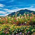 Flatirons And Flowers by Gregory J Summers