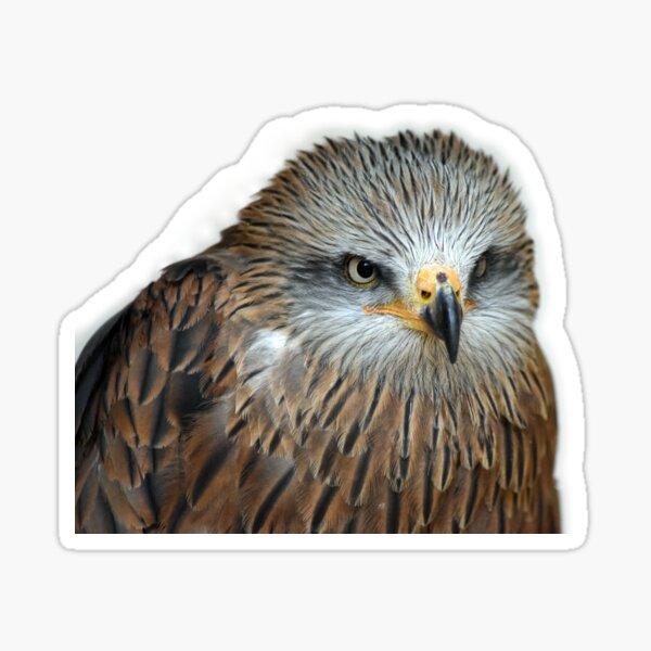 Red Kite Sticker