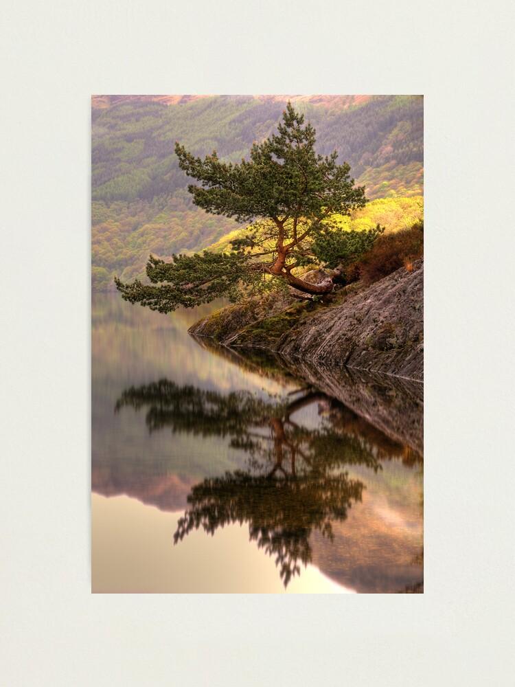Alternate view of The Rowardennan Bonsai Photographic Print