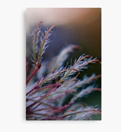 Marvelous 2 (from wild flowers collection) Canvas Print