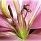 *Feature Page/ Macro - Enchanted Flowers*