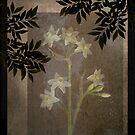 Narcissus Silhouettes by Marsha Tudor