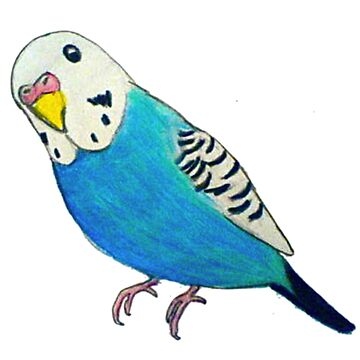 Parakeet Drawing by parakeetart