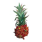 A pineapple watercolor by StefaStefo4ka