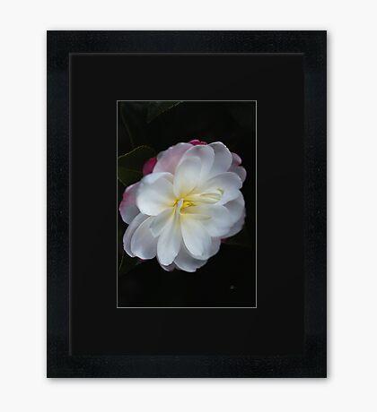 Camellia Lushness Of Winter Framed Print