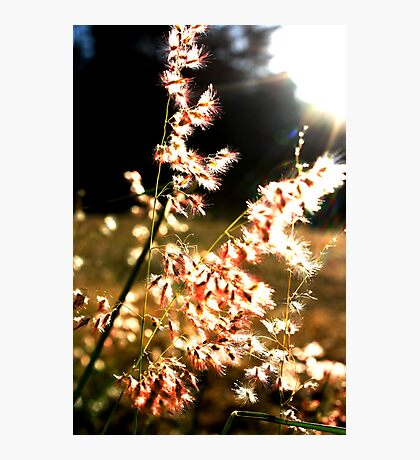Pink and soft, light and free Photographic Print