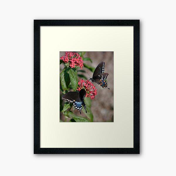 Giant Swallowtails Framed Art Print