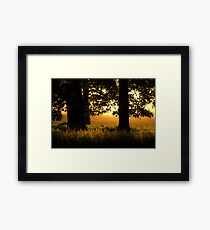 A Glimmer Of Light  Framed Print