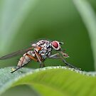 Fly macro by relayer51