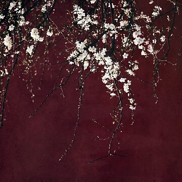 Blossoms on ruby red by Ingz
