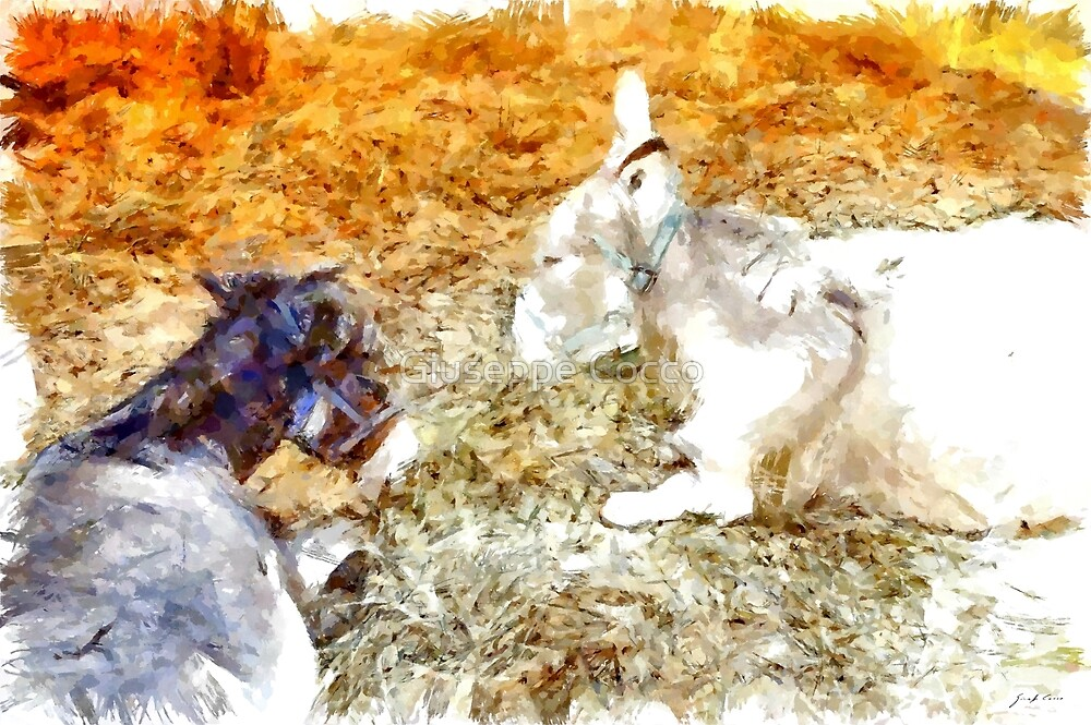 Donkey puppies by Giuseppe Cocco