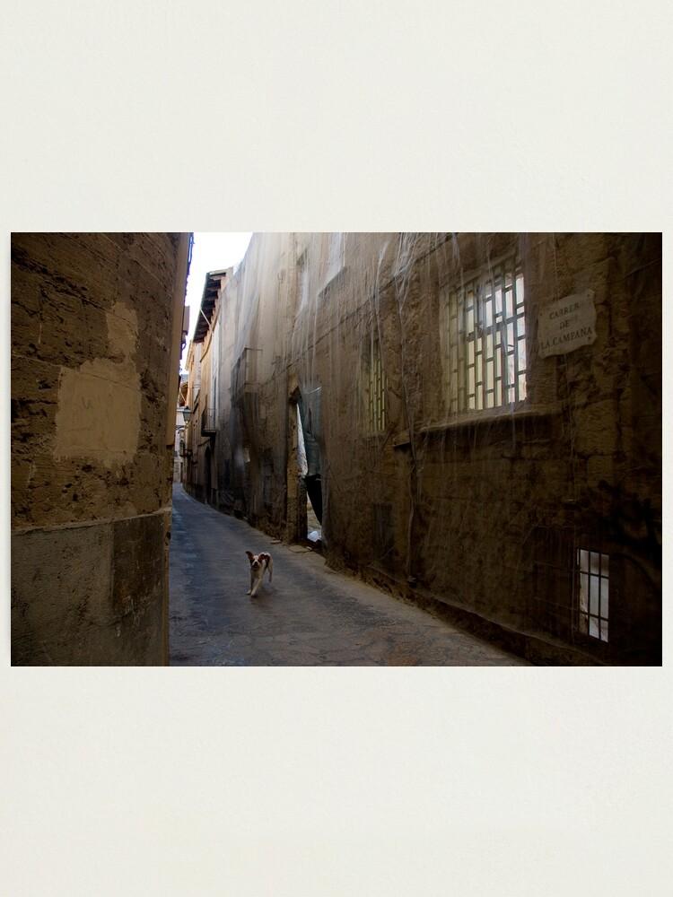 Alternate view of Dog Street Photographic Print