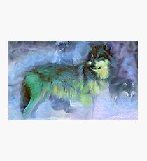 Grey Wolves Photographic Print