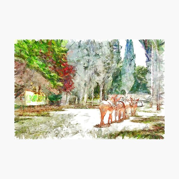 Donkeys in single file Photographic Print