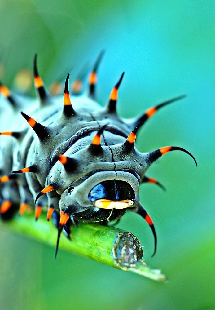 Close Up - Cairns birdwing caterpillar by Jenny Dean