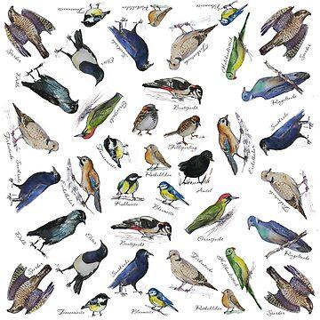 Birds Garden by Redilion