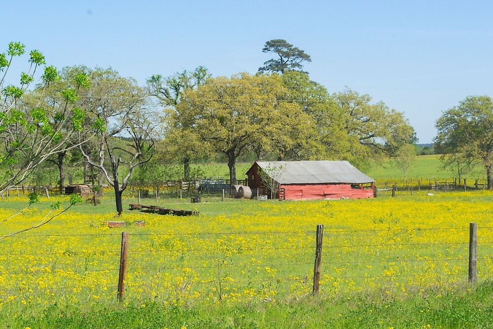 Backroad Country Barn by Morgana Horn