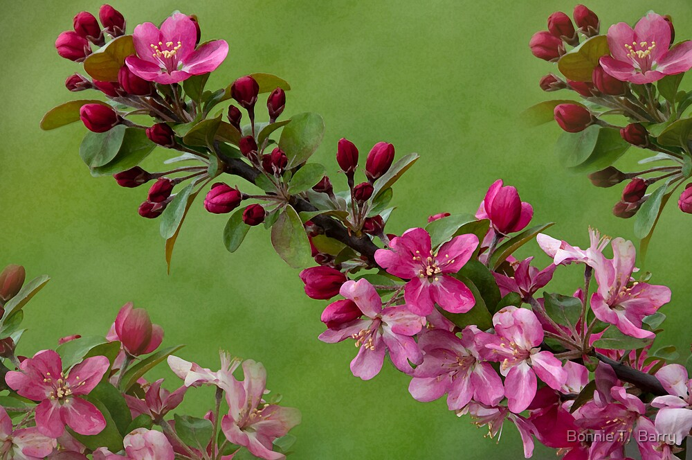 Beautiful Branches by Bonnie T.  Barry