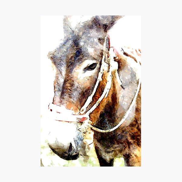 Muzzle of donkey Photographic Print