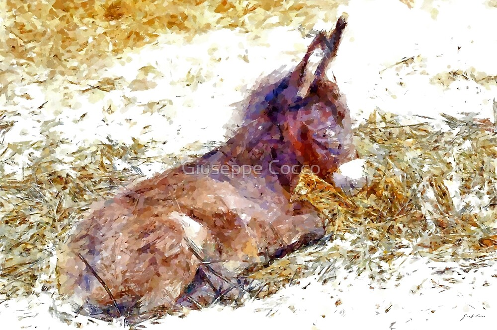 Donkey puppy by Giuseppe Cocco