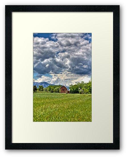 Green Green Grass by Jonathan Bartlett