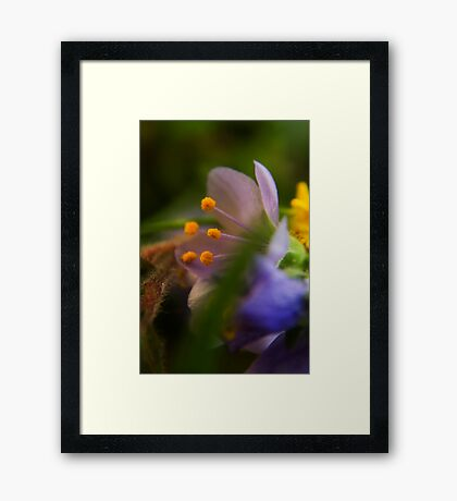 Palette (from wild flowers collection) Framed Print