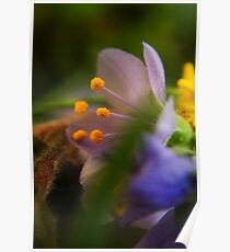 Palette (from wild flowers collection) Poster
