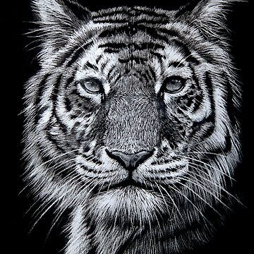 Portrait of a Tiger by Deebs1973