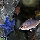 Blue Starfish and Fish by Savannah Gibbs