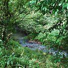 Little stream by Graham Mewburn