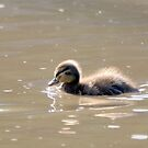 """""""Ugly duckling"""" by MarekM"""