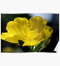 Beautiful Yellow Bloom Poster